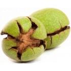 روغن پوست سبز گردو مالشی 60 سی سی